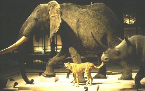ニコラ・フィリベール Nicolas Philibert 動物、動物たち Un animal, des animaux