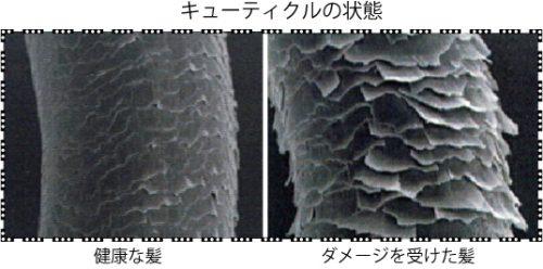 髪の毛の構造 トリートメント