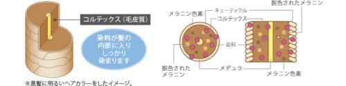 ヘアカラー(永久染毛剤)【医薬部外品】