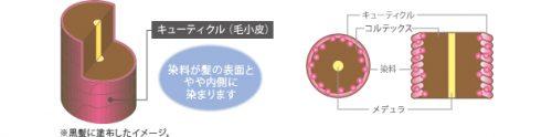 ヘアマニキュア(半永久染毛剤)【化粧品(染毛料)】