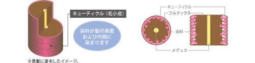 カラートリートメント類(徐染性染毛料)【化粧品(染毛料)】